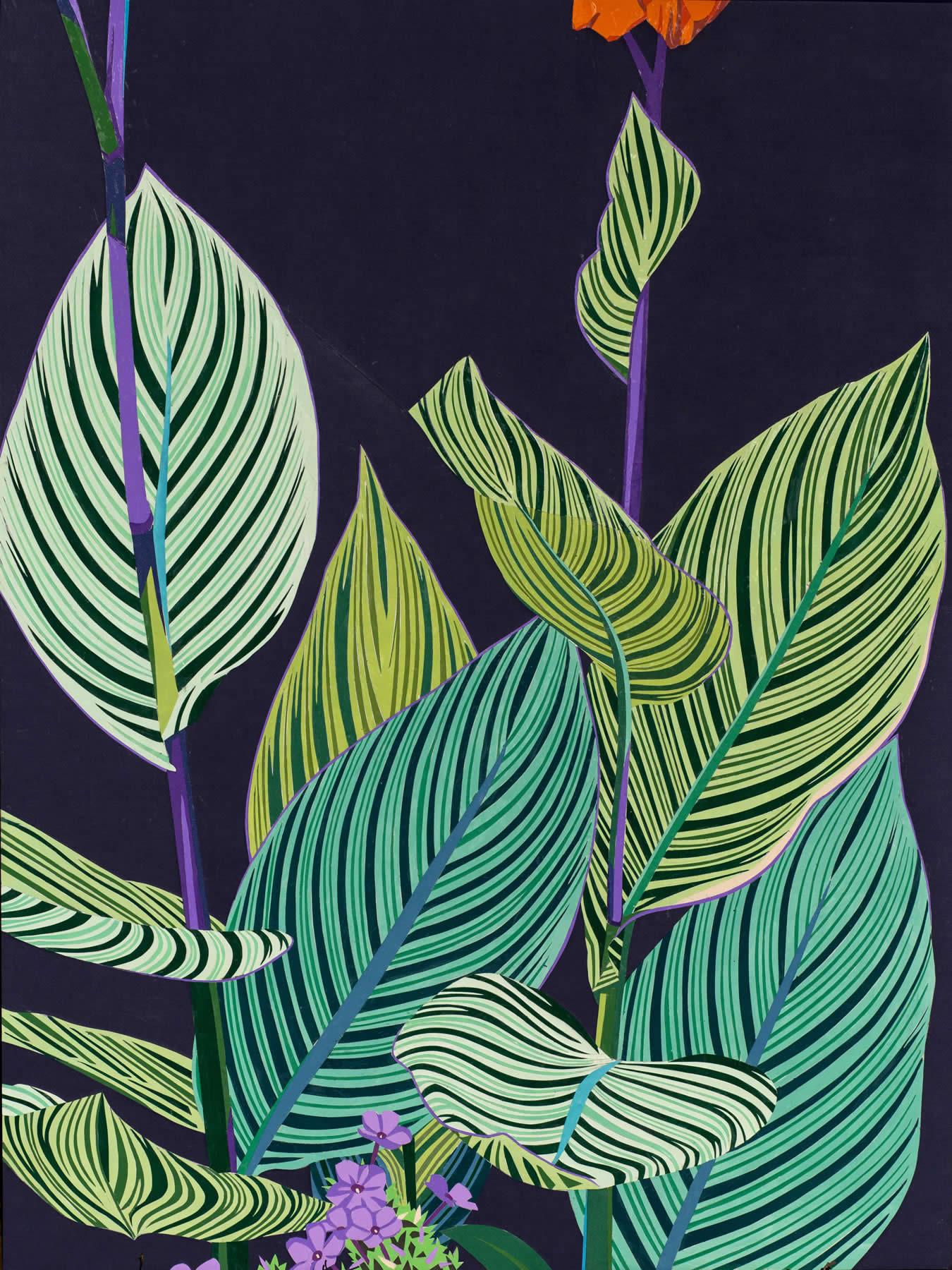 Canna Pretoria Lily
