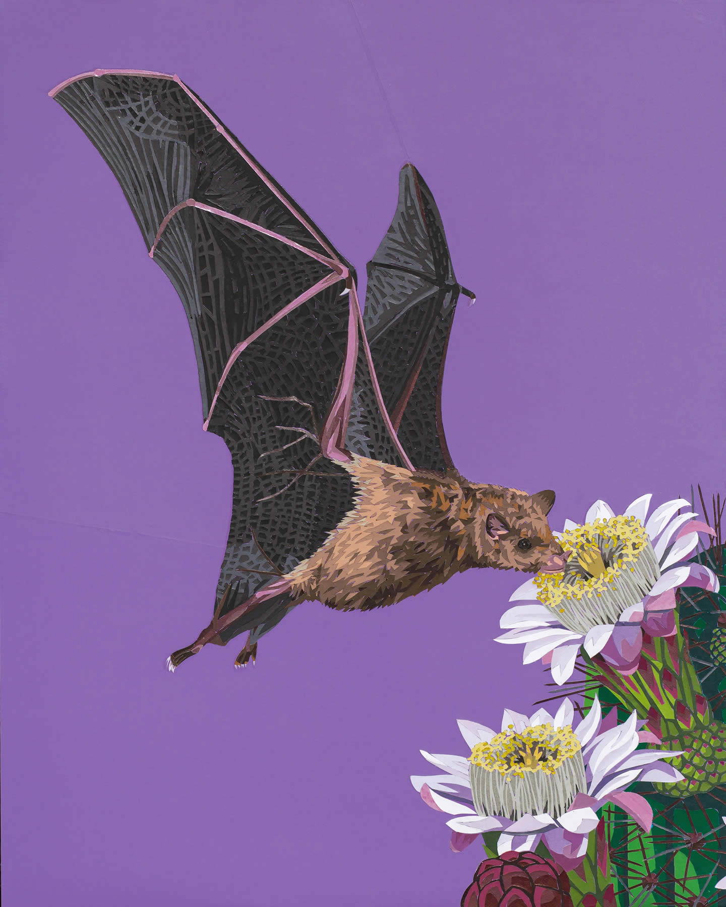 Lesser Long-Nosed Bat with Pipe Organ Cactus