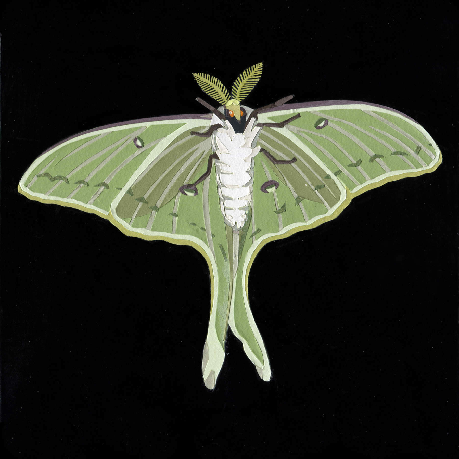 Luna Moth on My Studio Window